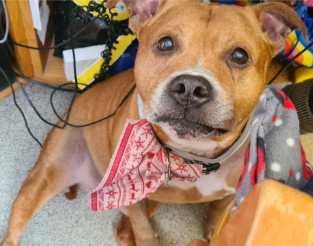 Terry - dog at Leicester Animal Aid